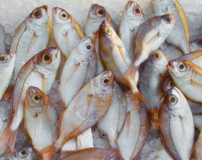 Fisheries Quota Competition Review