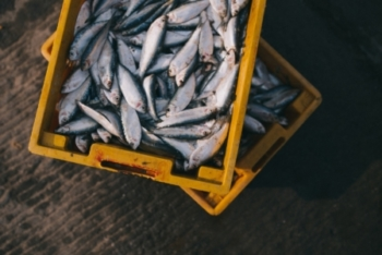 Seafood Industry Growth Strategy, New Zealand